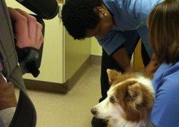 Vets On Call Dr. Randall